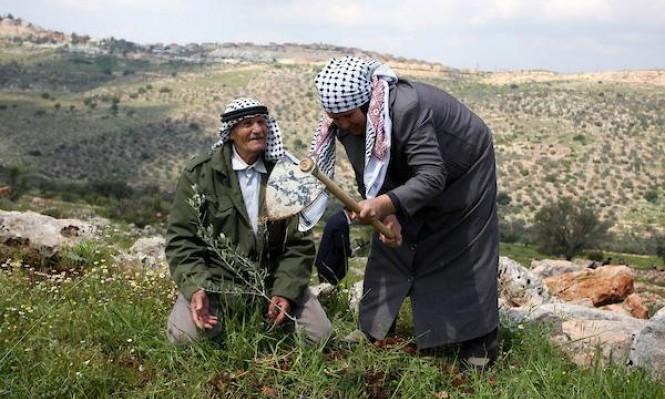 قرية في الضفة الغربية رائدة في الزراعة العضوية