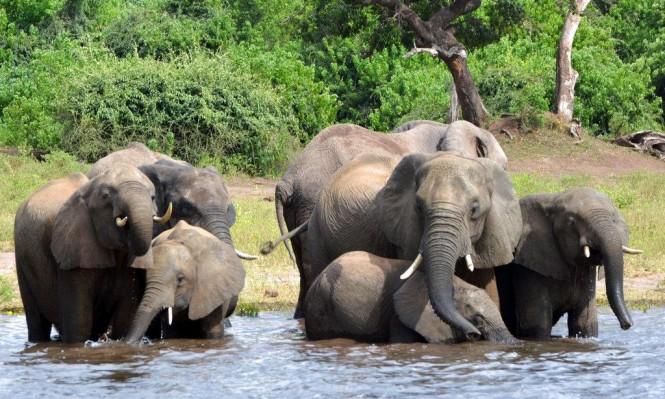 أكبر مجزرة بحق الفيلة منذ سنوات