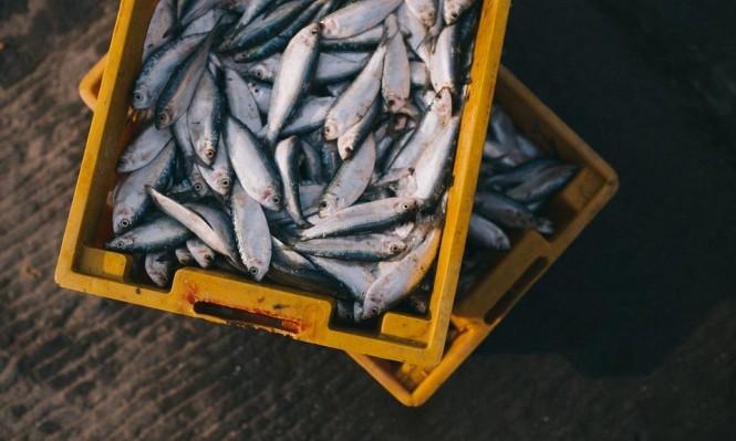 تناول الحوامل للأسماك بكثرة يقوي نمو الدماغ لدى أجنتهن