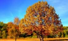 حالة الطقس: غائم جزئيا ولا تغيير في درجات الحرارة