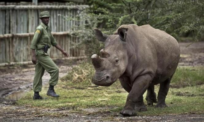 جنوب أفريقيا: انخفاض الصيد غير المشروع لوحيد القرن