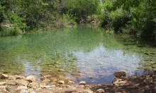 واوي يعض 5 متنزهين في عين الجوسق قرب بيسان