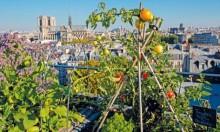 """""""الزراعة الحضرية"""": سقوف أبنية خضراء في باريس"""