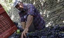 ازدهار صناعة النبيذ تعيد مستثمرين لبنانيين إلى وطنهم