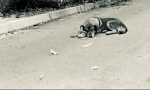 مصر: مقترحٌ لتصدير الكلاب الضالة إلى دول تأكلها