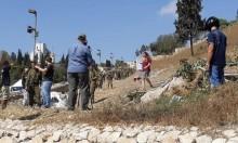 مستوطنون يقتلعون مئات أشجار الزيتون بالضفة والقدس