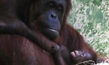 """ولادة نادرة لـ""""إنسان الغاب"""" في باريس"""