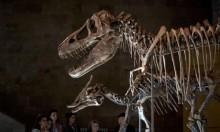 دراسةٌ جديدة تُغيِّر تصوُّر العلماء لبيض بعض الديناصورات