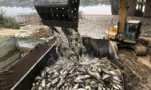العراق: نفوق ملايين الأسماك في نهر الفرات