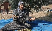 """غول المصادرة يلتهم ألف دونم لتوسيع """"عابر وادي عارة"""""""