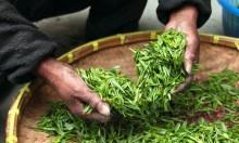 دراسة: 10 نباتات للعلاج والوقاية من سرطان الكبد