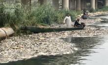 العراق: فحوصات لمياه الفرات تُثبت أن التلوث سبب نفوق الأسماك