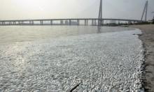 الصين: نفوق آلاف الأسماك المهددة بالانقراض بسبب أعمال البناء