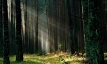 بولندا: هل زراعة الغابات تقلل التلوث أم أنها بروباغاندا؟
