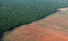 اقتلاع أشجار غابات الأمازون بالبرازيل: عام سيئ ومستقبل أسوأ