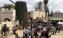 الناصرة: نصب أكبر شجرة ميلاد