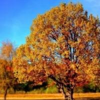 حالة الطقس: صاف وارتفاع في درجات الحرارة وانخفاض في الرطوبة