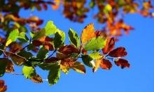 حالة الطقس: درجات الحرارة فوق المعدل السنوي