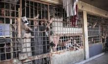 سورية: أكثر من 560 فلسطينيًا قُتِلوا تحت التعذيب في سجون النظام