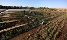 قرار إسرائيلي بوقف استيراد الفواكه والخضار من الضفة