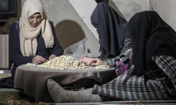 غزة: تقشير البندق مهنة نسوة عائلة أبو موسى..