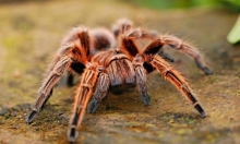 """أستراليا: الشرطة تهرع لـ""""إنقاذ"""" رجل من عنكبوت!"""