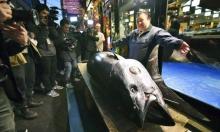 مليونير ياباني يشتري سمكة تونة بـ3 ملايين دولار!