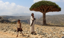 سقطرى: مطامع الإمارات بالجزيرة اليمنية