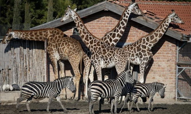 الحيوانات تبحث عن الشمس في حديقة إزمير التركية