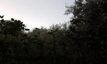 حالة الطقس: لطيف ودافئ نسبيا في ساعات النهار