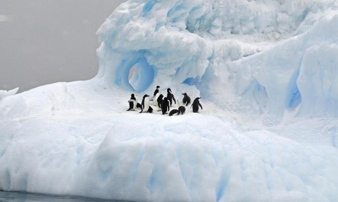 أنتراكتيكا:281% نسبة الزيادة السنوية لذوبان الجليد