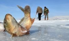 هكذا يكون الصيد في بحيرة متجمّدة ...