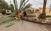 رياح شديدة تقتلع الأشجار وتخلف خسائر مادية