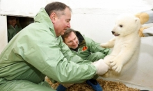 برلين: ولادة شبلاء دب قطبي مهددة بالإنقراض
