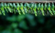دراسة: انقراض الحشرات خلال قرن ينذر بكارثة طبيعية