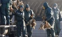 اكتشافُ نوع جديد لمرض إنفلونزا الطيور في مصر
