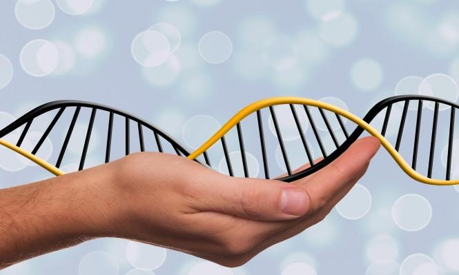 علماء يطالبون بوقف التعديل الوراثي للأجنّة البشرية