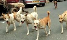 كلاب الشوارع في مصر.. بين التصدير والإخصاء والتسميم