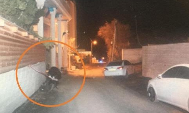 أم الفحم: اعتقال 4 مشتبهين بقتل ساهر محاميد