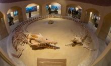 وادي الحيتان: 40 مليون سنة من التطوّر البيئي الساحر في مصر