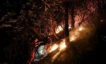 الصين: مصرع 24 رجل إطفاء إثر حريق في غابة
