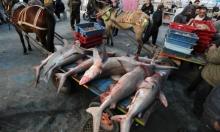 سمك القرش في بحر غزة