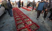 خيرات غزة بعد زيادة مساحة الصيد