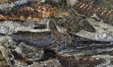 مستحاثات عمرها 66 مليون عام تروي قصة نيزك أصاب الأرض