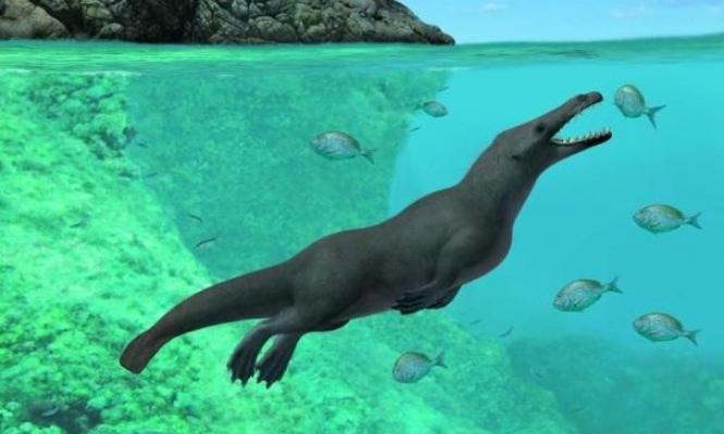 """دراسة: حفريات لحيتان """"برمائية"""" بأربع أرجل"""