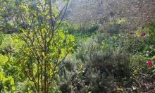 حالة الطقس: لطيف ويحتمل سقوط أمطار محلية بعد الظهر