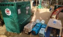 غزة: حيوانات جديدة تفرّ من الحصار