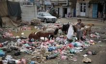 عدم توزيع لقاح مرض الكوليرا في اليمن ساهم في تحوله الى وباء