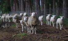 دراسة: استهلاك اللحوم مصدر لتلوث الأرض