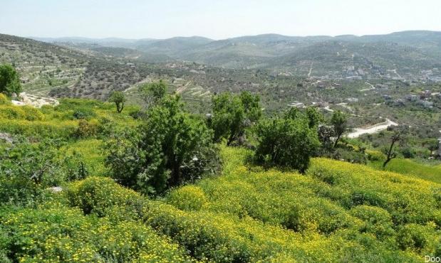 العثور على جثة شاب من عقربا في منطقة جبلية قرب كفرقاسم